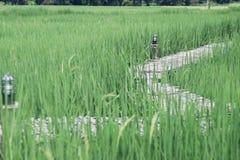 Bambubro, grönt fält arkivfoto