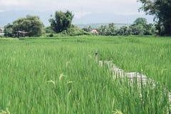 Bambubro, grönt fält royaltyfria bilder