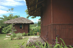 BambuBrown koja Royaltyfri Fotografi