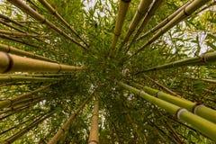 Bambudjungel av Anduze royaltyfri bild