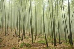 bambudunge Arkivfoto
