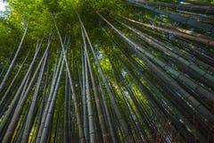 Bambudunge i Arashiyama, Kyoto, Japan arkivfoto