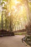 Bambudunge i höstsäsong på Arashiyama i Kyoto Royaltyfri Fotografi