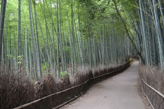 Bambudunge i Kyoto, Japan Royaltyfria Foton