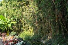 Bambudunge och en bananpalmträd i trädgården Arkivfoto
