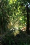 Bambudungen och ett bananträd reflekterade i sjön Royaltyfria Bilder