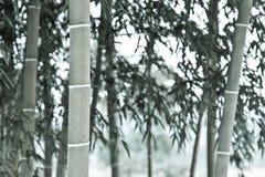 bambuentonighet Arkivfoton