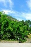 Bambufilial i skogen arkivfoto
