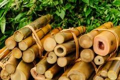 Bambufors Royaltyfri Foto