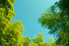 bambuinterlopersky Fotografering för Bildbyråer