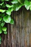 bambuklättrare Royaltyfri Fotografi