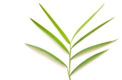 bambuleaf Royaltyfri Bild