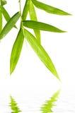 bambuleaf Royaltyfri Fotografi