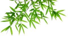 bambuleaves Arkivbilder