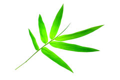 bambuleaves Royaltyfria Bilder