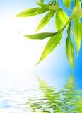 bambuleaves Fotografering för Bildbyråer