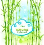 bambunaturbakgrund Arkivbilder