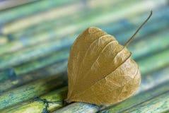 bambuphysalis Arkivfoton