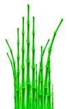Bambupinnar över vit bakgrund Royaltyfria Foton