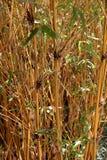 Bambupinnar med gröna sidor Fotografering för Bildbyråer