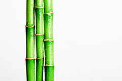 Bambupinne Arkivbild