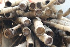 Bambupinne, grupp av bambupinnar, royaltyfri bild