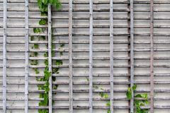 Bamburaster Arkivbilder