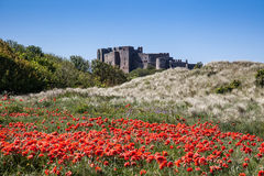 Bamburgh Castle and poppys Royalty Free Stock Photo