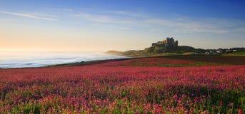 Bamburgh Roszuje, Northumberland & różowe firletki obraz royalty free