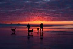 Bamburgh Sunrise. Bamburgh beach and castle at low tide with the  Sunrise Northumberland UK Stock Images