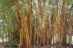 Bambusów badyle Zdjęcie Stock