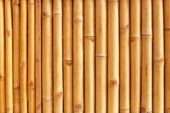 Bambusów badyli wzór Zdjęcia Royalty Free