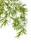 bambusów liść fotografia stock
