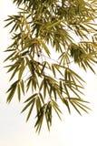 bambusów liść Zdjęcie Royalty Free