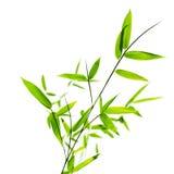 bambusów liść Obrazy Royalty Free