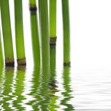 bambusów liść Obrazy Stock