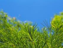 Bambusów liście nad błękita jasnego nieba tłem Fotografia Royalty Free