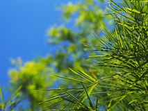 Bambusów liście nad błękita jasnego nieba tłem Fotografia Stock