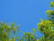 Bambusów liście nad błękita jasnego nieba tłem Zdjęcie Royalty Free