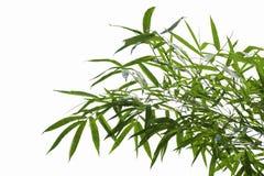 Bambusów liście odizolowywają na białym tle Zdjęcie Royalty Free