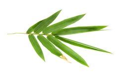 Bambusów liście odizolowywający Obraz Stock