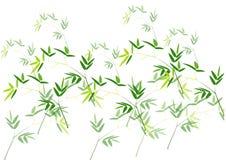 Bambusów liście, Zielony bambusowy wektorowy ilustracyjny biały tło Obrazy Stock