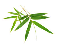Bambusów liście Zdjęcie Royalty Free