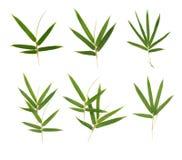 Bambusów liście Zdjęcia Stock