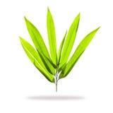 Bambusów liście  Zdjęcia Royalty Free