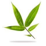 Bambusów liście   Zdjęcie Stock