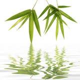 bambusów liście Obraz Stock
