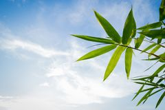 Bambusów liście na niebieskim niebie Obrazy Royalty Free