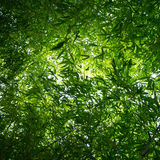 Bambusów liście od above Obraz Royalty Free