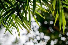 Bambusów liście z bokeh Zdjęcia Stock